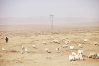China;climate-change;global-warming;dry;drought;water;water-shortage;earth;soil;desertificatiion;Inner-Mongolia;dessicationvisibility;sand;sand-storm;shepherd;flock;sheep;farming;animals;herding