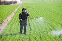 China;climate-change;global-warming;dry;drought;water;water-shortage;food;food-production;crops;food-security;food-shortage;crop-yield;farming;food-supply;soil;farming;wheat;green;spring;winter-wheat;women;woman;spray;spraying;pesticide;insecticide;toxic;poison;poisonous;contamination;contaminated;dangerous;health;environment;degraded;residue;poison;harmful;Hangang