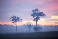 Australia;tree;sunrise;dawn;colour;glow;smoke;smoky;bush-fire;fire;forest-fire;visibility;Orbost;New-south-Wales;Eucalyptus;controlled-burn;controlled-burning
