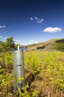tree-planting;Haweswater;Lake-District;UK;hill;mountain;reservoir;tree;protection;plastic;carbon-offset;climate-change;habitat;restoration;habitat-restoration;Oak;Oak-tree