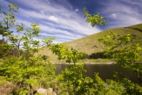 tree-planting;Haweswater;Lake-District;UK;hill;mountain;reservoir;tree;protection;plastic;carbon-offset;climate-change;habitat;restoration;habitat-restoration;Oak;Oak-tree;Spring