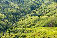 Malawi;Africa;aerial;aerial-photography;land;landscape;green;forest;tree;deforestation;farmland;river;maize;crops;food;subsistence-agriculture;hill;slope;farmstead;river