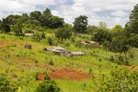 Malawi;Africa;environment;Zomba;Zomba-plateau;forest;forestry;tropical;town;hill;mountain;slope;steep;green;lush;verdant;fertile;palm-tree;deforestation;farm;house;farmstea;agriculture;farming;subsistence-farming;soil;maize