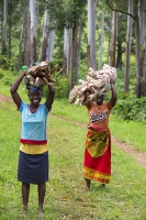 Malawi;Africa;environment;woman;female;Zomba;Zomba-plateau;forest;forestry;deforestation;chopping-down;illegal;subsistence;poor;poverty;hard-work;load;heavy;burden;carry;carrying;charcoal;walking;barefoot;environmental-destruction;balance;head