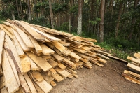 Malawi;Africa;environment;Zomba;Zomba-plateau;forest;forestry;deforestation;chopping-down;illegal;environmental-destruction;plank;logged