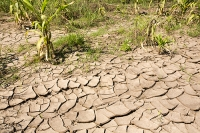 Malawi;Africa;flood;floods;flooding;African;disaster;climate-change;global-warming;refugee;Shire-Valley;destroyed;destruction;river-bank;eroded;erosion;undercut;washed-away;flood-debris;food;crop;buried;farming;agriculture;subsistence;maize;drying-up;drying;dessicated;mud-cracks