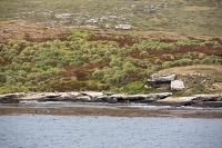 Argentina;South-America;Austral;coast;island;island-chain-Falkland;Falklands;Falkland-Islands;Malvinas;South-Atlantic;English;Westpoint;Island;Tussock-grass;coast;habitat;shelter;moorland;moor;rugged;remote;isolated;grass;plant