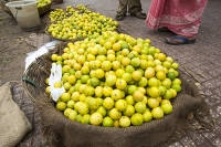 Mysore;India;Asia;Karnataka;colourful;shop;yellow;fruit;Lime;Limes;basket;market;street-market;selling;sales;customer;display;food;agriculture