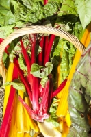 red;orange;green;vibrant;stalk;leaf;vegetable;harvest;food;color;colour;basket;Autumn;season;stem;vitamins;vitamin;healthy;fresh;produce;allotment;garden;food;crop;Chard;rainbow-chard