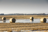 20121213_B18A3703.jpg Straw bales on a flooded field on the Fylde, in Lancashire, UK. The spring and summer of 2012 was very wet, affecting food production, as many crops were flooded.