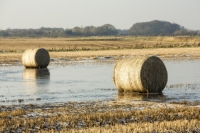 20121213_B18A3704.jpg Straw bales on a flooded field on the Fylde, in Lancashire, UK. The spring and summer of 2012 was very wet, affecting food production, as many crops were flooded.