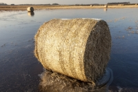20121213_IMG_2448.jpg Straw bales on a flooded field on the Fylde, in Lancashire, UK. The spring and summer of 2012 was very wet, affecting food production, as many crops were flooded.