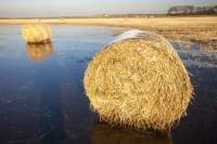20121213_IMG_2459.jpg Straw bales on a flooded field on the Fylde, in Lancashire, UK. The spring and summer of 2012 was very wet, affecting food production, as many crops were flooded.