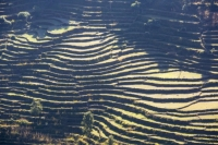 20121224_B18A5030.jpg Subsistence farming in the Annapurna Himalayas in Nepal. The terracing has been developed over centuries to farm this steep mountain land.