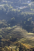 20121224_B18A5032.jpg Subsistence farming in the Annapurna Himalayas in Nepal. The terracing has been developed over centuries to farm this steep mountain land.
