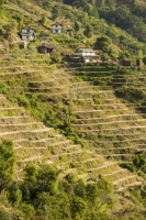 20121225_B18A5382.jpg Subsistence farming in the Annapurna Himalayas in Nepal. The terracing has been developed over centuries to farm this steep mountain land.