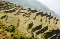 20121225_B18A5385.jpg Subsistence farming in the Annapurna Himalayas in Nepal. The terracing has been developed over centuries to farm this steep mountain land.