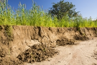 Malawi;Africa;flood;floods;flooding;African;disaster;climate-change;global-warming;refugee;Shire-Valley;destroyed;destruction;river-bank;eroded;erosion;undercut;washed-away;flood-debris;Maize;food;crop;farming;agriculture;subsistence;river-bank;soil;undercut;eroded;erosion
