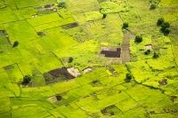 Malawi;Africa;agriculture;green;food-crop;crops;rice;rice-paddy;aerial;boundary;geen;Shire-Valley;path;track;road;woodland;wet;water;pond;swamp;boundary;field-boundary;pattern;mosaic;Maize;fertile;sustainable-agriculture;subsistence-farming