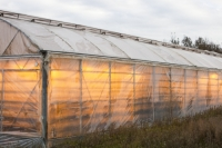 Iceland;nursery;greenhouse;glass-house;renewable-energy;geothermal;carbon-neutral;plastic;crop;vegetables;Geysir
