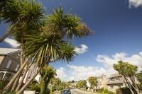 Cornwall;coast;UK;Falmouth;town;road;house;tree;Palm;Palm-Tree;warm;gulf-stream;climate-change;global-warming;latitude;tropical;warm-loving
