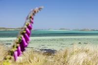 Cornwall;UK;coastal;sea;atlantic;ocean;sky;blue;outdoors;landscape;summer;sun;Tresco;island;Scilly;Scilly-Isles;Isles-of-Scilly;Gulf-Stream;mild;tropical;North-Atlantic-Drift;sea-temperature;ocean-current;vegetation;climate-change;global-warming;tropical;beach;sand;sandy;tide;low-tide;intertidal;aquamarine;shallow;sea-bed;foxglove
