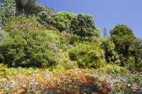 Cornwall;UK;coastal;sea;atlantic;ocean;sky;blue;outdoors;landscape;summer;sun;Tresco;island;Scilly;Scilly-Isles;Isles-of-Scilly;Gulf-Stream;mild;tropical;North-Atlantic-Drift;sea-temperature;ocean-current;vegetation;climate-change;global-warming;Abbey-Gardens;garden;gardening;tropical-plant;tree;palm-tree