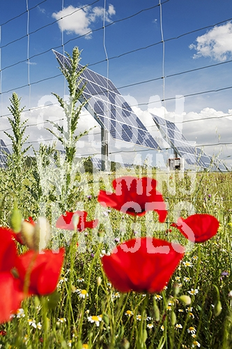 A photo voltaic solar power station near Caravaca, Andalucia, Spain, with wild flowers.