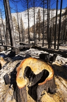 USA;US;America;California;light;sunlight;Yosemite-National-Park;tree;mountain;forest;nature;back-country;landscape;woodland;drought;climate-change;global-warming;dried-up;wild-fire;bush-fire;conifer;pine-tree;destroyed;destruction;black;blackened;burn;burnt;devastation;air-pollution;air-quality;carbon;greenhouse-gas;particles;ash;habitat;consequence;aftermath;Little-Yosemite-Valley;art;heart;heart-shaped;shape