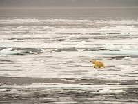 Svalbard-Spitzbergen-North-Arctic-warming-climate-change-global-
