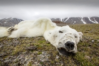 Svalbard-Spitzbergen-North-Arctic-warming-climate-change-global-;sea-ice-sea-ice-retreat-Arctic