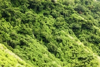 green-leaves-chlorophyl-tree-forest-rainforest-tropical-tropics-