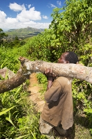 Malawi;Africa;environment;man;male;Zomba;Zomba-plateau;forest;forestry;deforestation;chopping-down;illegal;subsistence;poor;poverty;hard-work;load;heavy;burden;carry;carrying;charcoal;walking;barefoot;environmental-destruction