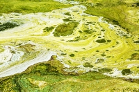 USA;US;America;California;Mojave-Desert;desert;Tehachapi-Pass;brown;drought;reservoir;lake;dessicated;dried-up;mud-cracks;climate-change;global-warming;white;mineral;algae;toxic;blue-green-bacteria;pattern;art;colourful;nature;green