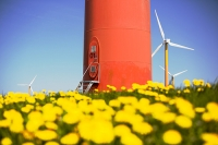 Holland;Netherlands;renewable;renewable-energy;carbon-footprint;climate-change;global-warming;green;clean;wind;wind-power;energy;wind-turbine;wind-farm;blade;nacelle;Nuon;colour;colourful;orange;yellow;tower;polder;polders;reclaimed;sea-level;agriculture;field;flower;Dandelion