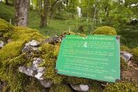 Settle;Yorkshire-Dales;UK;woodland;Countryside-Stewardship-Scheme;farming;grant;conservation;managed;management