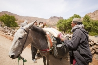 20120409_IMG_4510.jpg A mule loaded in the Jebel Sirwa region of the Anti Atlas mountains of Morocco, North Africa. Mules are amazing animals capable of carrying great loads and cost around 1000 Euros.