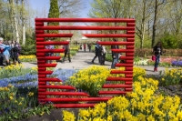 Keukenhof;Lisse;Holland;Netherlands;Spring;flower;flowers;bulb;tulip;tulips;bulb-fields;tulip-fields;horticulture;production;agriculture;floral;colour;colourful;Hyacinth;bouquet;specialist;red;yellow;orange;season;famous;garden;world-famous;Spring-garden;flower-bed;border;borders;green;manicured;manicure;Daffodil;multi-coloured;public;crowd;tourist-attraction-tourist;farme;art