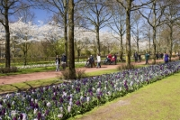 Keukenhof;Lisse;Holland;Netherlands;Spring;flower;flowers;bulb;tulip;tulips;bulb-fields;tulip-fields;horticulture;production;agriculture;floral;colour;colourful;Hyacinth;bouquet;specialist;red;yellow;orange;season;famous;garden;world-famous;Spring-garden;flower-bed;border;borders;green;manicured;manicure;Daffodil;multi-coloured;public;crowd;tourist-attraction-tourist;grass;lawn