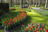 Keukenhof;Lisse;Holland;Netherlands;Spring;flower;flowers;bulb;tulip;tulips;bulb-fields;tulip-fields;horticulture;production;agriculture;floral;colour;colourful;Hyacinth;bouquet;specialist;red;yellow;orange;season;famous;garden;world-famous;Spring-garden;flower-bed;border;borders;grass;lawn;green;manicured;manicure;Daffodil;tree;tourism;tourist-attraction