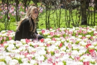 Keukenhof;Lisse;Holland;Netherlands;Spring;flower;flowers;bulb;tulip;tulips;bulb-fields;tulip-fields;horticulture;production;agriculture;floral;colour;colourful;bouquet;specialist;pink;season;famous;garden;world-famous;Spring-garden;flower-bed;border;borders;grass;lawn;green;manicured;manicure;woman;female;young;blond;attractive;sunglasses;posing;photograph