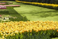 Keukenhof;Lisse;Holland;Netherlands;Spring;flower;flowers;bulb;tulip;tulips;bulb-fields;tulip-fields;horticulture;production;agriculture;floral;colour;colourful;bouquet;specialist;yellow;red;season;famous;garden;world-famous;Spring-garden;flower-bed;border;borders;green;manicured;manicure;Hyacinth