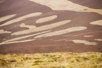 Southern-Uplands;Biggar;Scotland;UK;hill;moor;moorland;Spring;heather;vegetation;peat;carbon-sink;climate-change;carbon;sequestration;blanket-peat-bog;peat-bog;carbon-sink;carbon-store;Borders;Tinto-Hill;valley;Clyde;River-Clyde;pattern;shape;outline;heather-burning