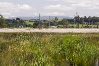 summer;woodland;green;Whitbarrow-Scar;Cumbria;UK;South-Cumbria;Foulshaw;nature-reserve;Cumbria-Wildlife-Trust;peat;peat-bog;raised-bog;wetland;bog;marsh;lowland;lowland-raised-bog;carbon;carbon-store;carbon-sequestration;climate;Foulshaw-Moss;tree;restoration;conservation;habitat;sphagnum;sphagnum-moss