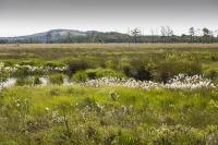 summer;woodland;green;Whitbarrow-Scar;Cumbria;UK;South-Cumbria;Foulshaw;nature-reserve;Cumbria-Wildlife-Trust;peat;peat-bog;raised-bog;wetland;bog;marsh;lowland;lowland-raised-bog;carbon;carbon-store;carbon-sequestration;climate;Foulshaw-Moss;tree;restoration;conservation;habitat;sphagnum;sphagnum-moss;Cotton-Grass