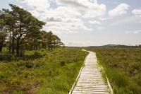 summer;woodland;green;Whitbarrow-Scar;Cumbria;UK;South-Cumbria;Foulshaw;nature-reserve;Cumbria-Wildlife-Trust;peat;peat-bog;raised-bog;wetland;bog;marsh;lowland;lowland-raised-bog;carbon;carbon-store;carbon-sequestration;climate;Foulshaw-Moss;tree;restoration;conservation;habitat;sphagnum;sphagnum-moss;boardwalk
