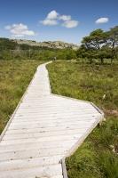 summer;woodland;green;Whitbarrow-Scar;Cumbria;UK;South-Cumbria;Foulshaw;nature-reserve;Cumbria-Wildlife-Trust;peat;peat-bog;raised-bog;wetland;bog;marsh;lowland;lowland-raised-bog;carbon;carbon-store;carbon-sequestration;climate;Foulshaw-Moss;tree;restoration;conservation;habitat;sphagnum;sphagnum-moss;man;boardwalk;trail;naturalist