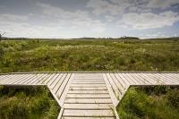 summer;woodland;green;Whitbarrow-Scar;Cumbria;UK;South-Cumbria;Foulshaw;nature-reserve;Cumbria-Wildlife-Trust;peat;peat-bog;raised-bog;wetland;bog;marsh;lowland;lowland-raised-bog;carbon;carbon-store;carbon-sequestration;climate;Foulshaw-Moss;tree;restoration;conservation;habitat;sphagnum;sphagnum-moss;boardwalk;trail;junction