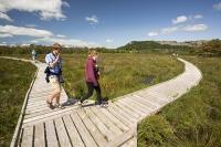 summer;woodland;green;Whitbarrow-Scar;Cumbria;UK;South-Cumbria;Foulshaw;nature-reserve;Cumbria-Wildlife-Trust;peat;peat-bog;raised-bog;wetland;bog;marsh;lowland;lowland-raised-bog;carbon;carbon-store;carbon-sequestration;climate;Foulshaw-Moss;tree;restoration;conservation;habitat;sphagnum;sphagnum-moss;man;boardwalk;trail;naturalist;woman;junction