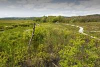 summer;woodland;green;Whitbarrow-Scar;Cumbria;UK;South-Cumbria;Foulshaw;nature-reserve;Cumbria-Wildlife-Trust;peat;peat-bog;raised-bog;wetland;bog;marsh;lowland;lowland-raised-bog;carbon;carbon-store;carbon-sequestration;climate;Foulshaw-Moss;tree;restoration;conservation;habitat;sphagnum;sphagnum-moss;boardwalk;trail